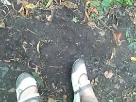 ausgelatschte schuhe im Wald